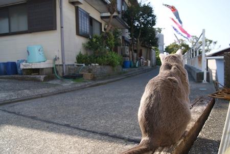 画題:五月ネコ 撮影者:西川百世さん