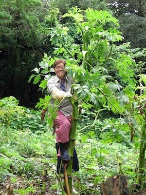 画題:あしたばの木に一姉のぼる 撮影者:栗本敬久さん
